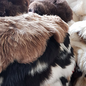 Icelandic sheepskin rug multi color tannery manufacturer